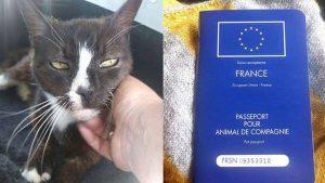 evcil hayvan pasaportu