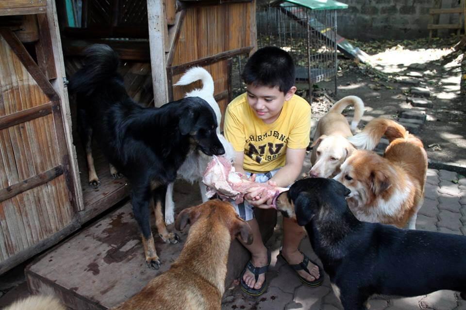 barınakta köpekler