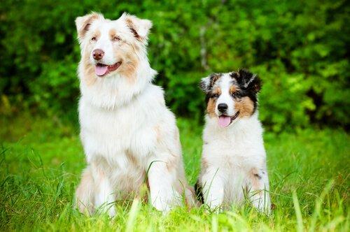 köpeklerde sosyalleşme