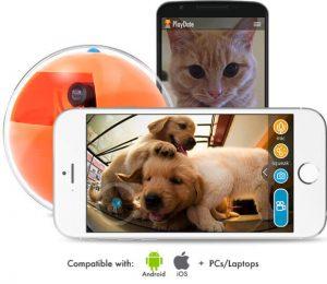 Mobil aplikasyon köpek izleme