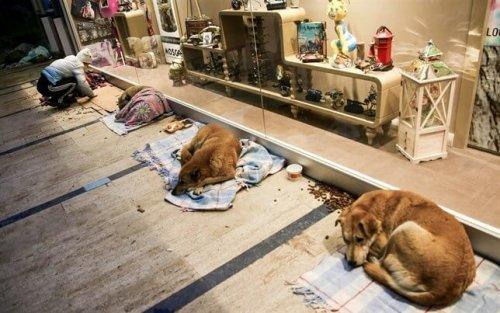 İstanbul'da Bulunan Bir Alışveriş Merkezi Sokak Köpeklerine Kapılarını Açtı
