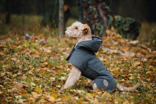 Köpeğiniz İçin Nasıl Yağmurluk Yapabilirsiniz