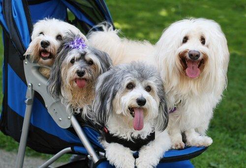 Köpekleri İnsanlaştırmanın 3 Tehlikesi