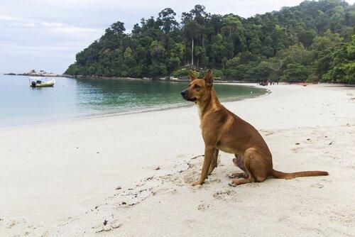 deniz kenarında köpek