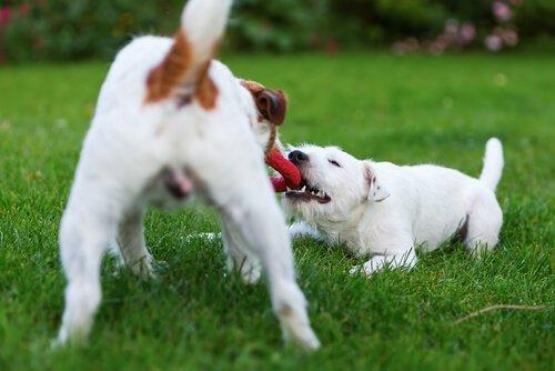 Köpeğinizin Mutlu Olması İçin Yapabileceğiniz 5 Şey