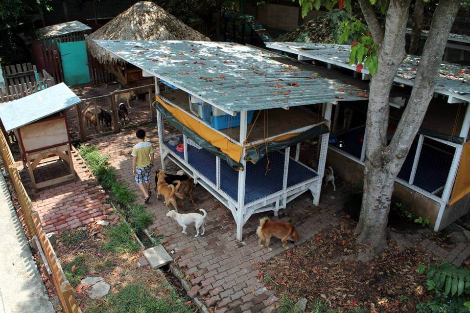 hayvan barınağı