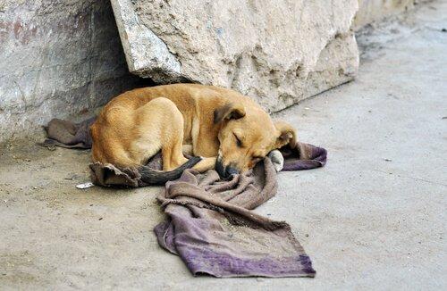 Hayvanları Kurtarmak için Hayatlarını Riske Atan Güney Amerikalılar