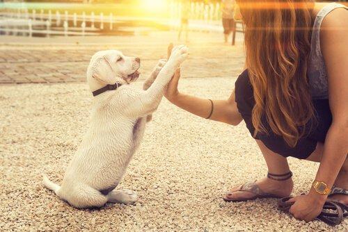 Köpekler Solak Olabilir Mi?