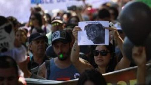 Cholito'nun Ölümünden Sonra Sosyal Medya Yasa Büründü