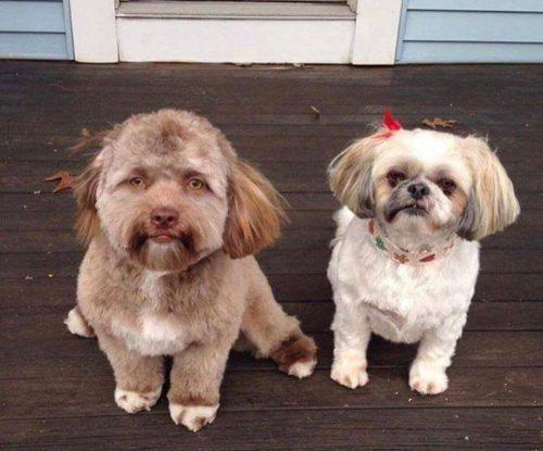 köpek yogi ve arkadaşı