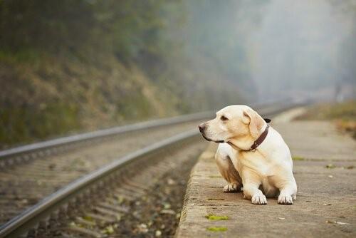 İnsanlar Neden Evcil Hayvanlarını Terk Eder?