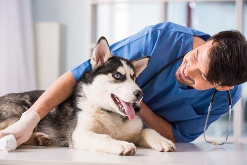 veterinerdeki korkan köpek