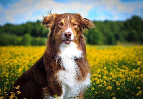 doğa ve köpek
