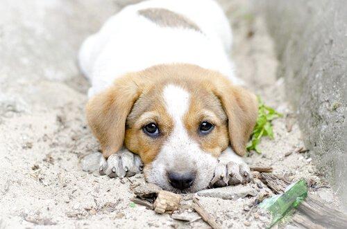 Yavru Köpek Sahiplenmek? Unutmayın, Onlar Birer İnsan Değil!