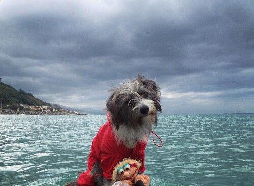 Gerçek Bir Deniz Köpeği Olan Nirvana İle Tanışın