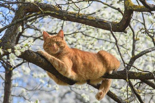 ağaçta sallanan kedi