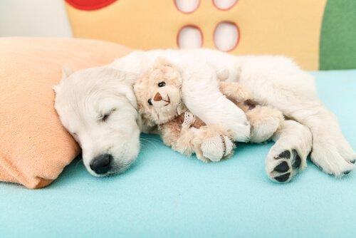 Köpekler İçin Airbnb: Yeni Bir Çözüm