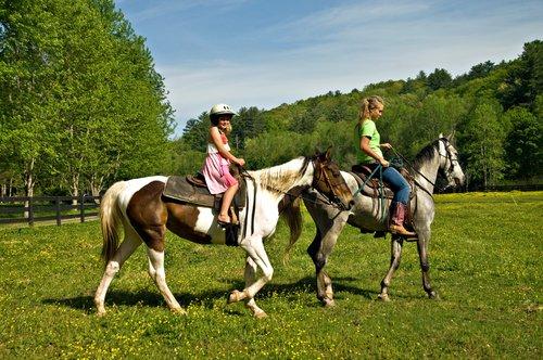 atlar insanların duygularını hisseder mi