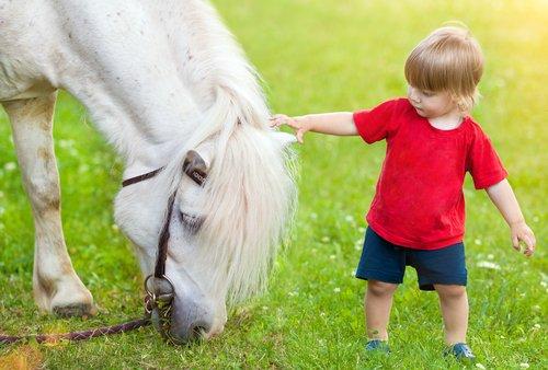 atların duyguları hissetmesi