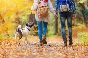 sonbahar yürüyüşünde köpek