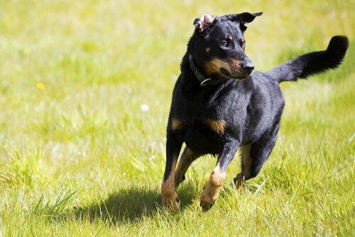 Bağımsız Köpek Yetiştirmek İçin Eğitim Tavsiyeleri