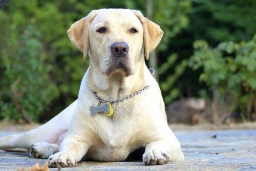 büyük köpekler için isimler