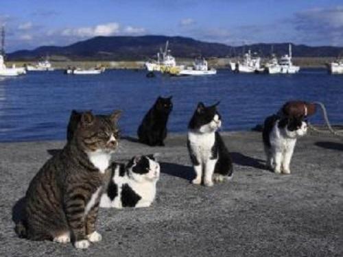istanbul'da kediler