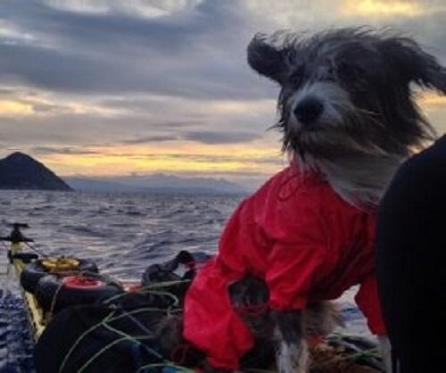denizde yolculuk eden köpek