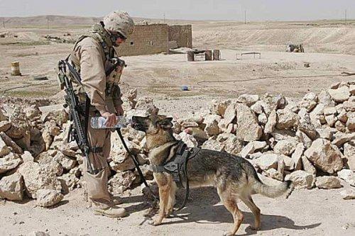 Afganistan'da Yaşanan Askerler ve Köpeklerin Dostluk Hikayeleri