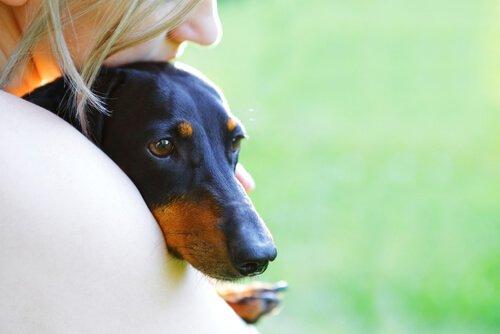 köpekler en iyi arkadaşımız