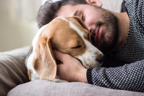 Köpekler İnsanın En İyi Arkadaşıdır
