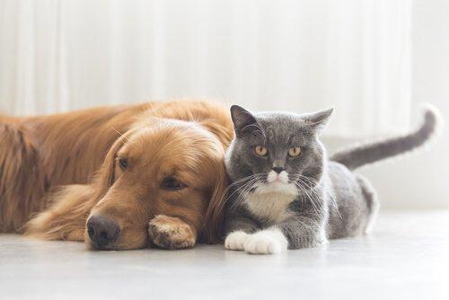 En Tehlikeli Evcil Hayvan Hastalıkları