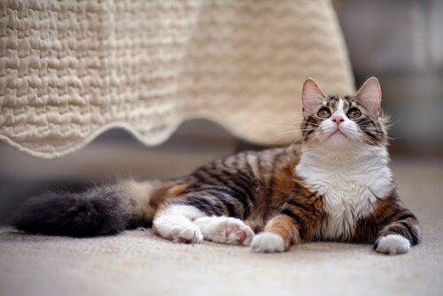 Evinizde Bir Kedi Sahibi Olma Rehberi