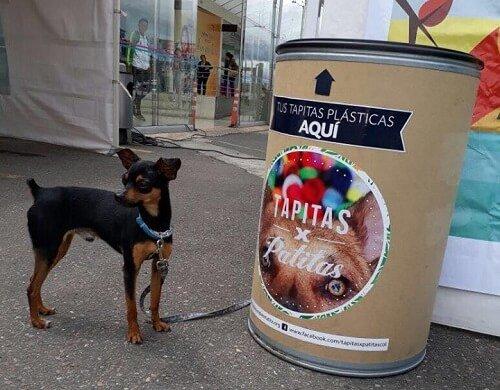 sokak hayvanlarına yardım