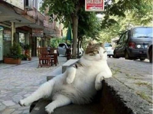kaldırımda oturan kedi