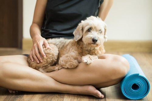 yoga sonrası köpek