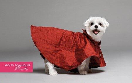 kırmızı ceketli köpek