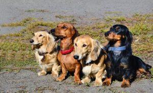 yan yana oturan köpekler