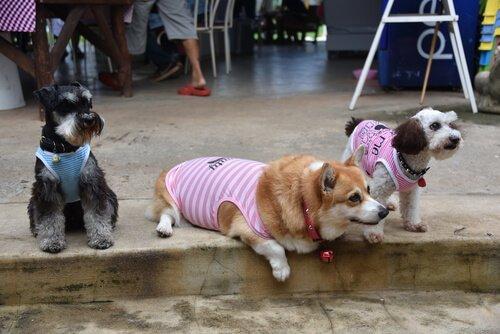 7 Sevimli Kırma Köpek Irkı