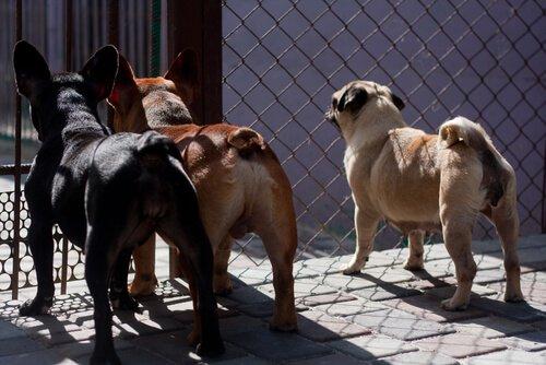 Tayvan'da Kedi Ve Köpek Eti Yasaklanıyor