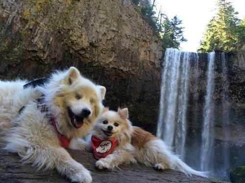 Kör Köpek Hoshi ve Rehber Köpeği Zen