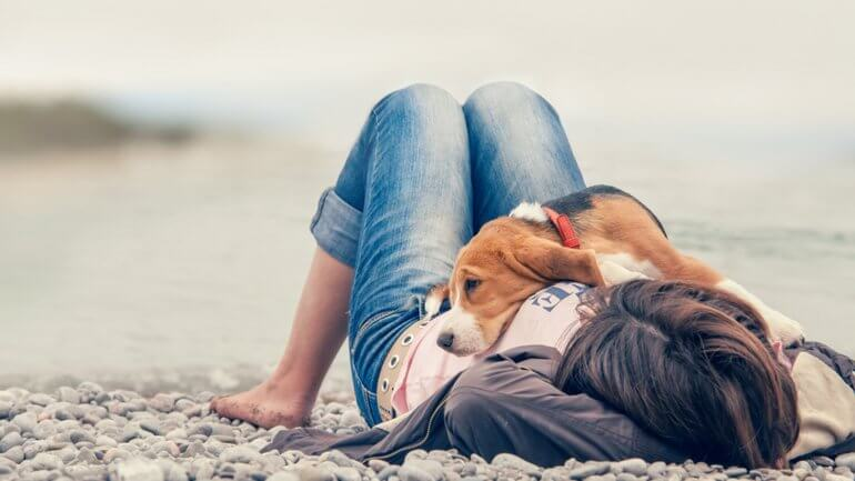 koruma köpeği