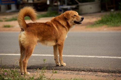 kayıp bir köpek