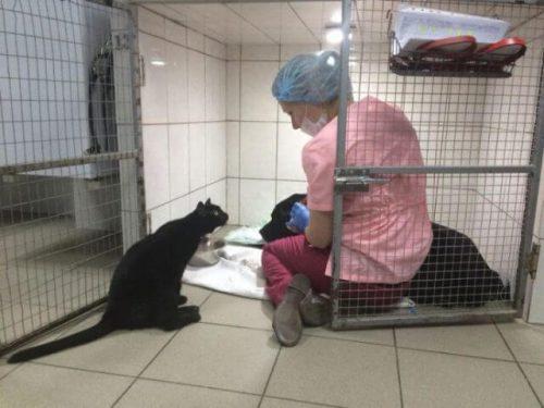 veteriner ve kedi
