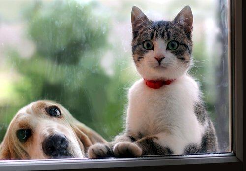 Kedi mi Köpek mi? Facebook Hayvanınıza Göre Sizi Analiz Ediyor