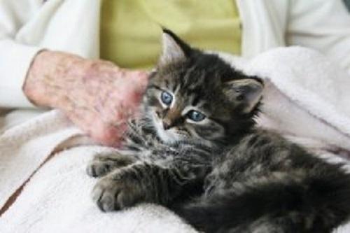 yaşlı insanın kucağında oturan kedi