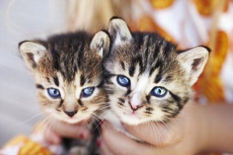 yavru kedi bakımı