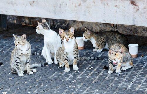 Kedilerin Şehri İstanbul