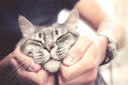 kedileri sevmek
