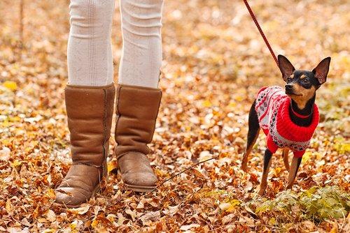 kışın kazak giymiş köpek